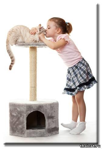 5 главных принципов выбора котенка, который доставит минимум хлопот и максимум радости и удовольствия