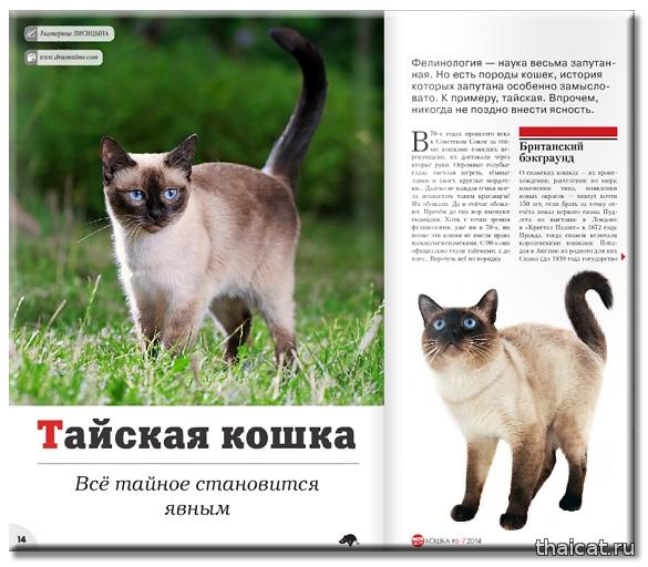 Тайская кошка. Все тайное становится явным. Екатерина Лисицына. Журнал Мой друг Кошка