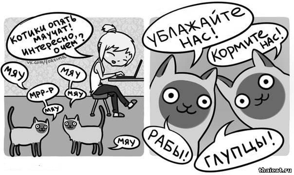 О чем мяукают кошки?