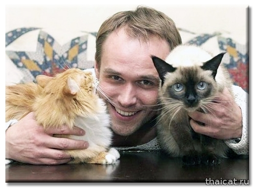 Актер Максим Аверин, тайская кошка Эсфирь и другие