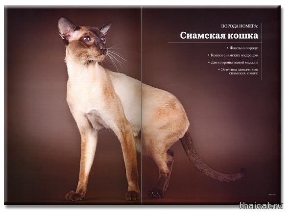 Сиамские кошки. Журнал Мой друг кошка №12-2012
