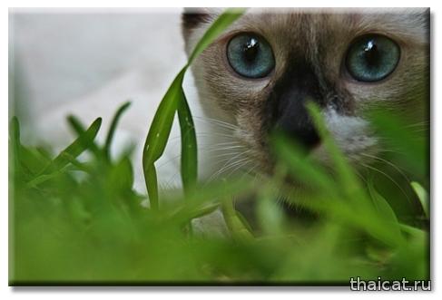 Как избавиться от аллергии на кошек