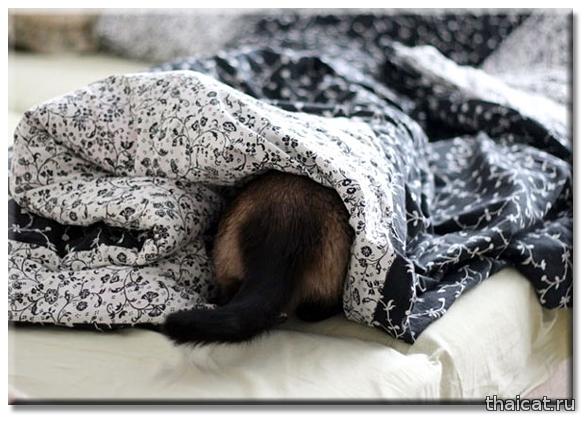 Кошка мяукает по ночам