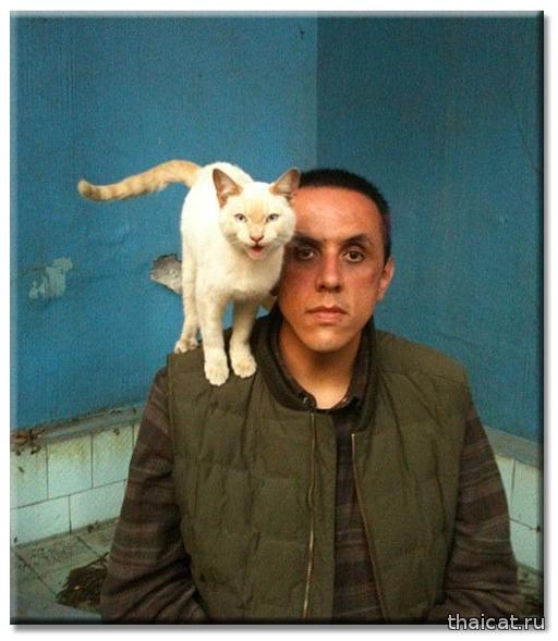 Мексиканский писатель Альберто Чималь и сиамская кошка