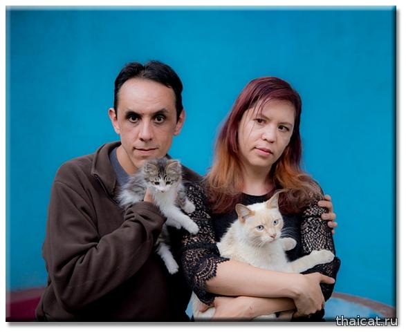Мексиканский писатель Альбрето Чималь с женой и кошками
