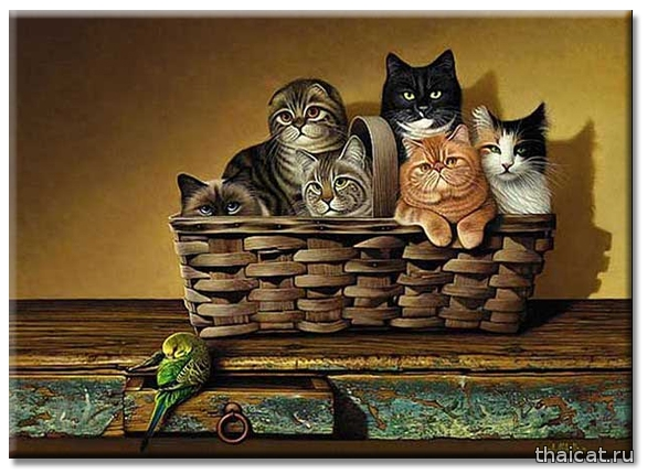 Бролдт Бролдс. Бушель и куча / 30кг кошек (Braldt Bralds. A Bushel and a Peck)