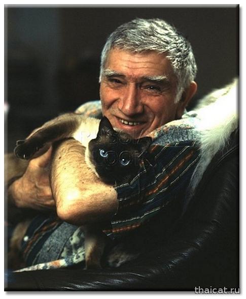Популярность сиамских и тайских кошек в СССР и России