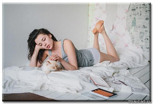 Очаровательная кошка ред-пойнт по кличке Майонез