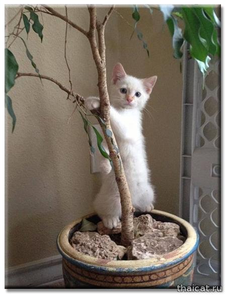 Как отпугивать кошек?