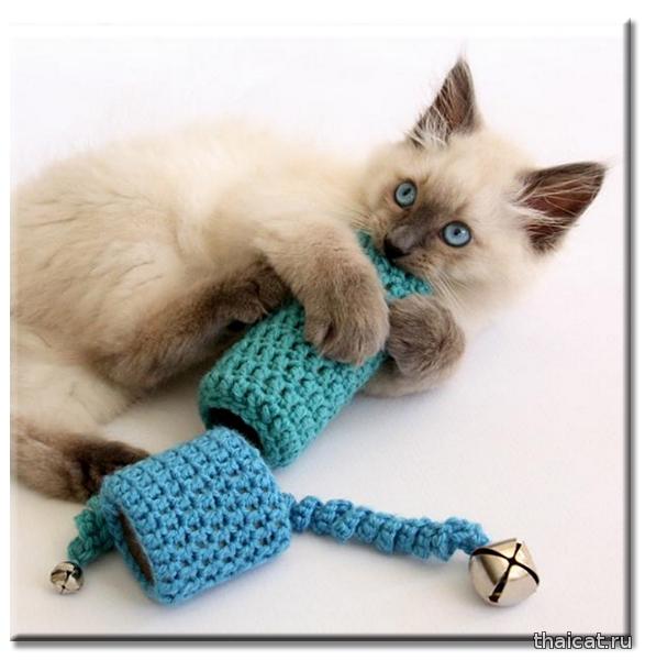 Лучшие игрушки для кошки