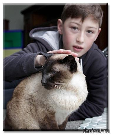 Сиамская кошка Минг / Клео