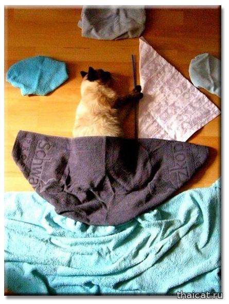 Домашняя фотосессия с кошкой