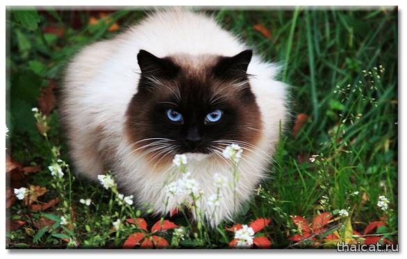 Что отпугивает кошек?