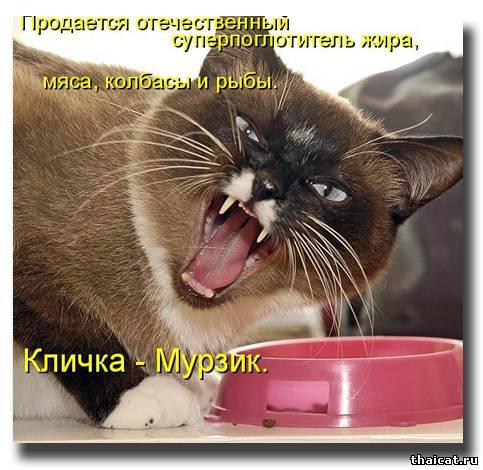 Продается отечественный суперпоглотитель жира, мяса, колбасы и рыбы по кличке Мурзик!