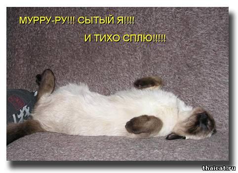 Мурру-ру! Сытый я!!! И тихо сплю!!!!!