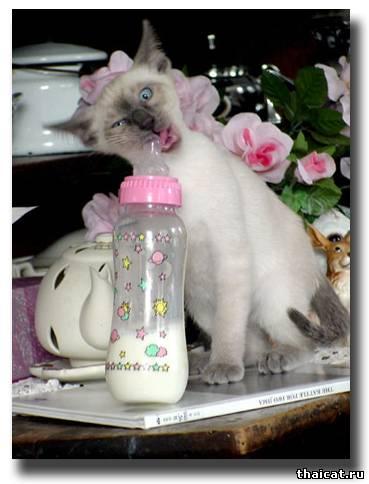 Молочка бы!