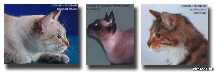 голова и профиль тайской кошки, меконг-бобтейла и курильского бобтейла