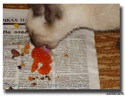 Красную икру.. да с газетки - это круто!