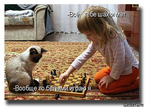 Все, тебе шах и мат!