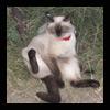 Дом счастливого кота (или почему это должно быть как-то иначе?)