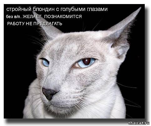 Стройный блондин с голубыми глазами без в/п