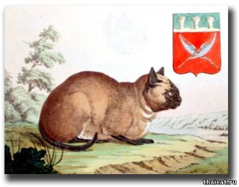 сиамская кошка, которую видел Симон Паллас