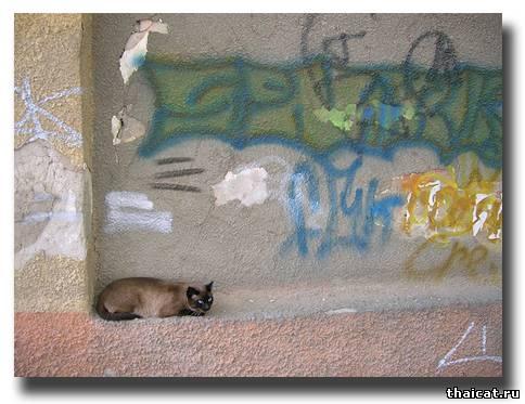 Важная деталь граффити