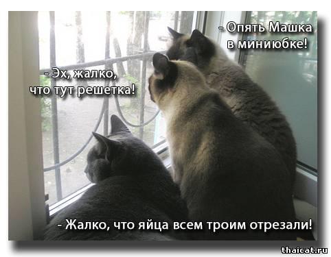 - Опять Машка в миниюбке!