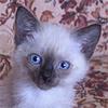 Королевские кошки-ангелохранители