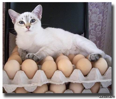 Кошка-наседка