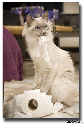 Смотри, Хозяин, кто-то всю туалетную бумагу изорвал! Честно, это не я!