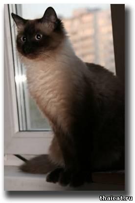 кот Нафаня