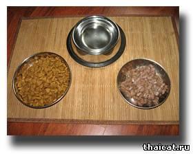 еда для тайской кошки