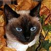 Тай-осень