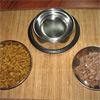 Кормление кошек и котят. Рекомендации кошководов