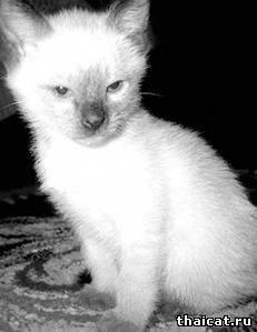 У кошки шишка на животе у кошки