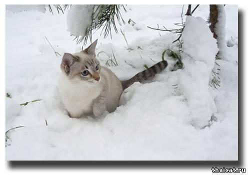 Картинки про котят зимой