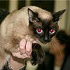 Кошка на экспертизе