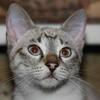 Кошка ест собственный кал (о витамине В12)