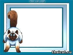 Голубая рамочка с тайским котиком