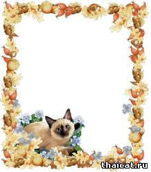 Осенняя рамочка с тайским котенком